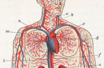 Mutuelle et maladies cardiovasculaires
